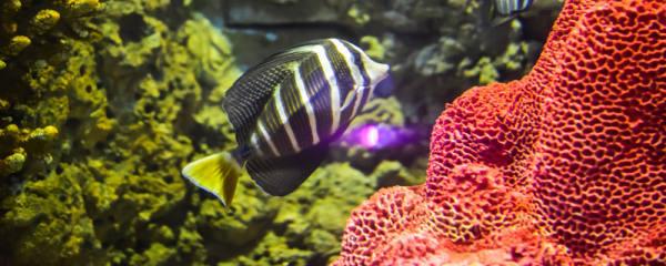 1米鱼缸用多大增氧泵,1米鱼缸适合养什么鱼