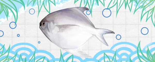 平鱼是海鱼吗,是无鳞鱼吗
