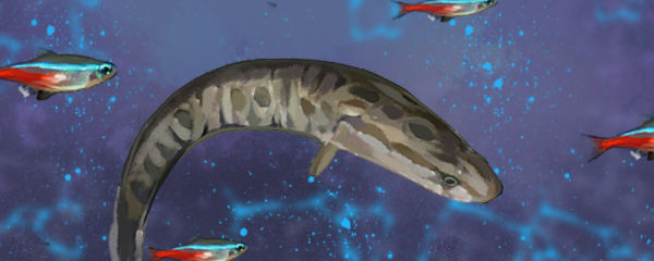 黑鱼可以和什么鱼混养,能和热带鱼一起养吗