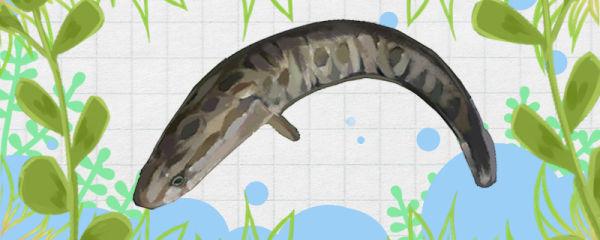 养黑鱼水放多了会死吗,放多少水合适
