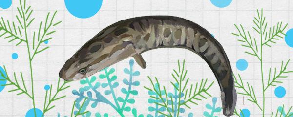 黑鱼是海鱼吗,生活在哪里