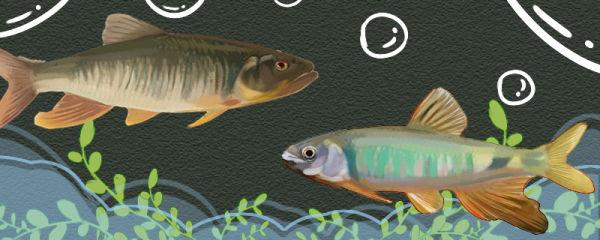 宽鳍鱲和马口鱼一样吗,有什么区别