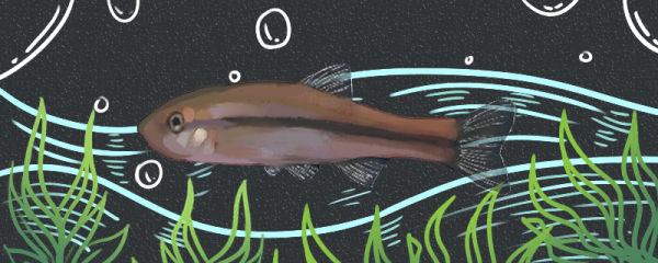柳根鱼刺多吗,和麦穗鱼哪个刺多
