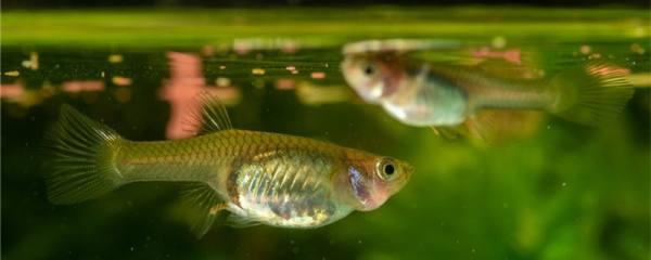 浮法玻璃鱼缸和超白哪个好,鱼缸有什么材质