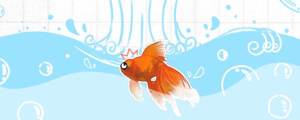 冬天小金鱼怎么养,生病了怎么办