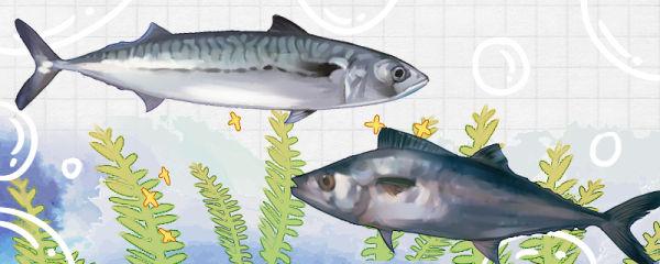 鲅鱼是不是马鲛鱼,和马鲛鱼有什么区别
