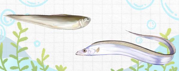 刀鱼和带鱼一样吗,有什么区别