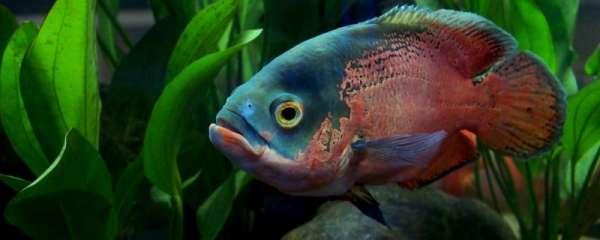 地图鱼水质ph多少合适,直接使用新打的自来水可以吗