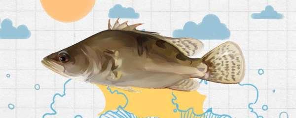 20亩能养多少桂鱼,能养多少鲤鱼
