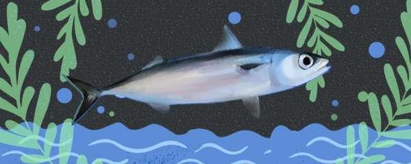 青花鱼是海鱼吗,是深海鱼吗
