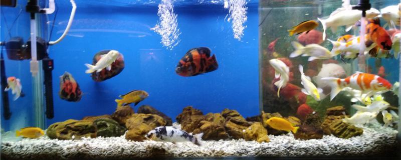 鱼缸里面水浑浊怎么办,为什么水会变浑