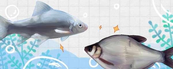 鲮鱼和鳊鱼一样吗,有什么区别