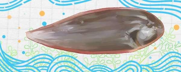 踏板鱼和龙利鱼一样吗,和比目鱼一样吗