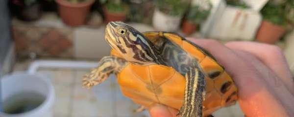 乌龟可以晒太阳吗,晒太阳有什么好处