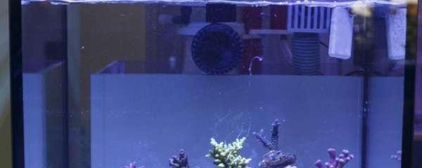 鱼缸24小时开着费电吗,鱼缸哪些设备耗电