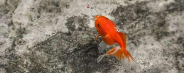 鱼塘底部用水泥还是用土工膜,水泥鱼池能养什么鱼