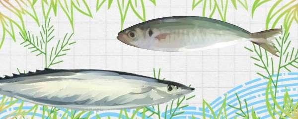 巴浪鱼和秋刀鱼一样吗,有什么区别