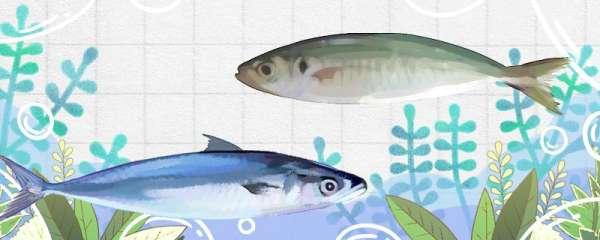 巴浪鱼和青占鱼一样吗,有什么区别