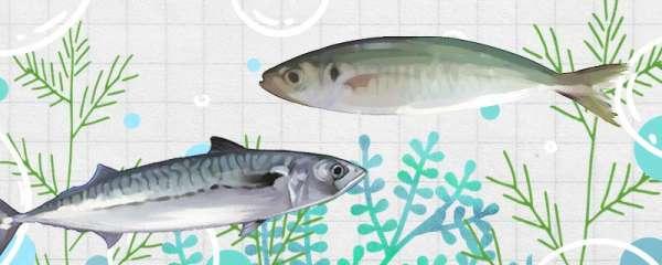 巴浪鱼和鲅鱼一样吗,有什么区别