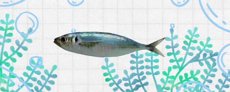 巴浪鱼有毒吗,有寄生虫吗