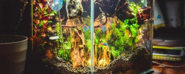 鱼缸壁上的绿藻怎么去除,如何预防藻类生长