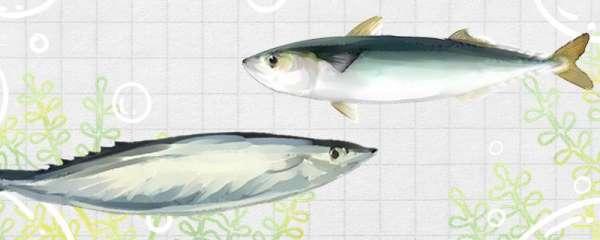 青条鱼和秋刀鱼是不是一个品种,有什么区别