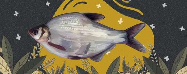 鳊鱼和鲫鱼一样吗,有什么区别