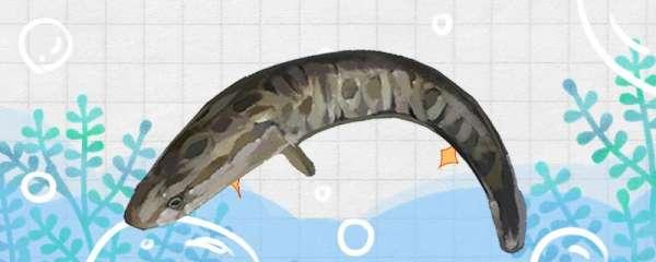 黑鱼怎么钓,钓黑鱼的方法技巧介绍