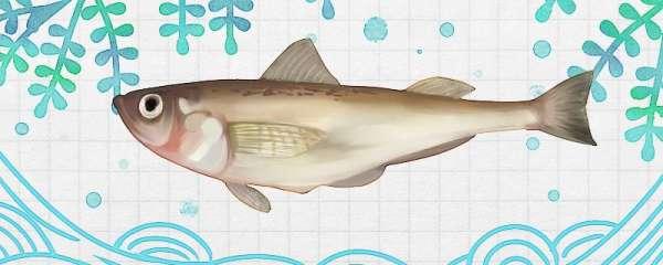 雷鱼是海鱼吗,能养殖吗