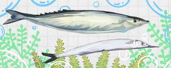 马步鱼和秋刀鱼一样吗,有什么区别