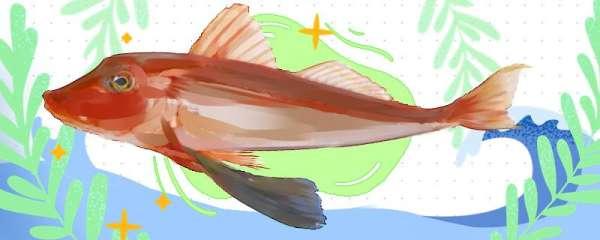 红头鱼是什么鱼,生活在什么地方