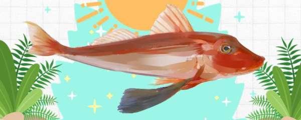 红头鱼有鳞吗,有刺吗