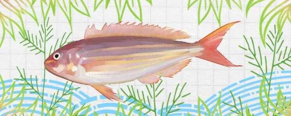 金线鱼是海鱼还是淡水鱼,生长在哪里
