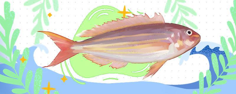 金线鱼是深海鱼吗,能人工饲养吗