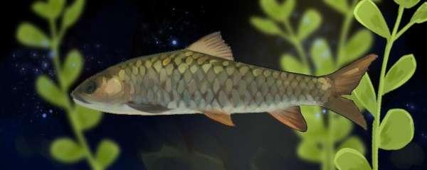 青竹鱼是什么鱼,生活在哪里