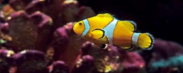 小丑鱼身上有白点是什么原因,应该怎么办