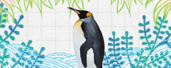 企鹅有没有鼻子,鼻子在哪里