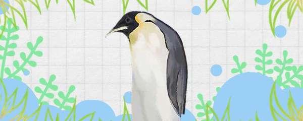 企鹅怕不怕冷,不怕冷的原因是什么