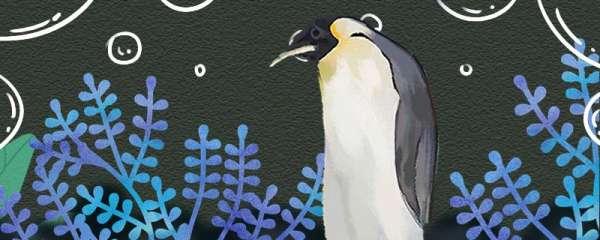 企鹅怎么取暖,会被热死吗