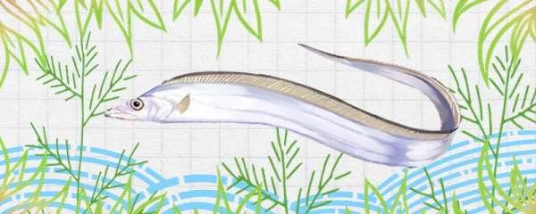 带鱼是深海鱼还是浅海鱼,能养殖吗