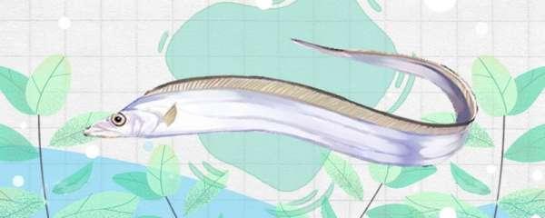 带鱼是深海鱼吗,生活在多深的水域