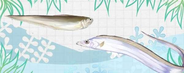 带鱼和刀鱼是不是一种鱼,有什么区别