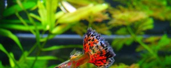 热带鱼为什么会死,热带鱼死亡有哪些原因