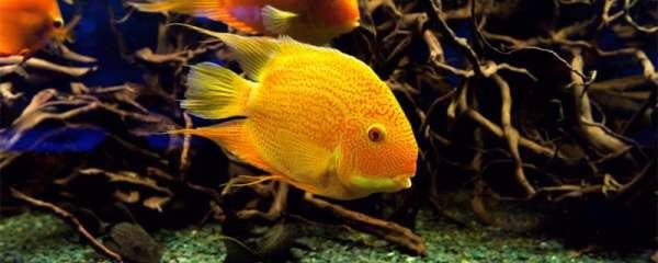热带鱼消化不良怎么办,为什么鱼儿会不吃东西
