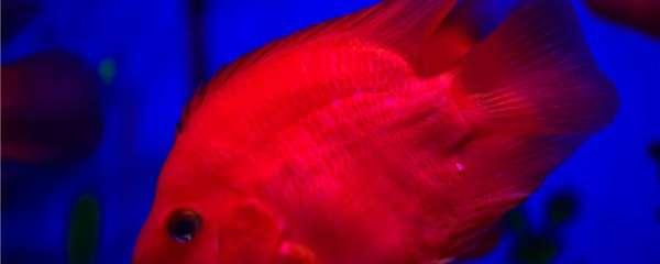 热带鱼白斑病怎么治,如何预防白斑病