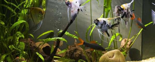 鱼缸缺氧怎么办,为什么会缺氧