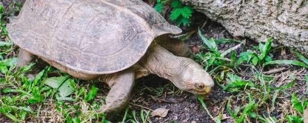 乌龟可以吃猫粮狗粮吗,怎么给乌龟喂食