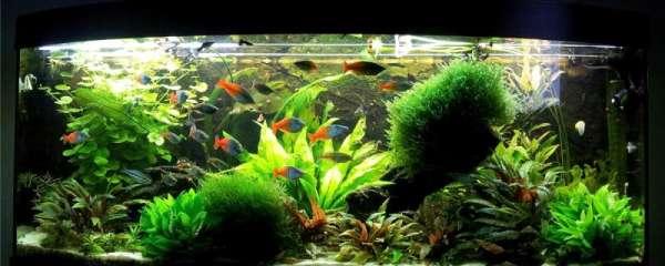 原生缸适合养什么鱼,原生缸养鱼有什么注意事项