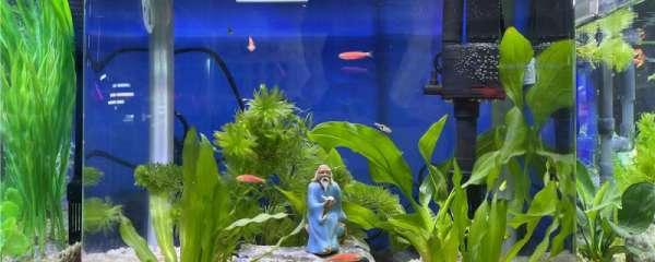 鱼缸里的灯有什么作用,怎么使用