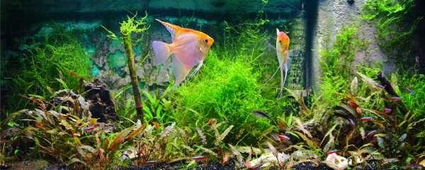 鱼缸用什么灯,鱼缸的灯要一直开着吗